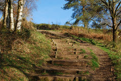 Springtime steps on Dartmoor, Devon. Wooden steps in rural woodland setting Stock Image