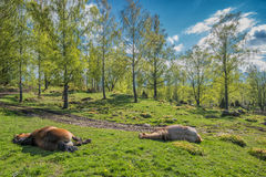 Springtime in Sweden Royalty Free Stock Photos