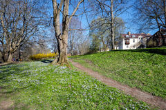 Springtime in Sweden. Early spring in Norrkoping, Sweden Stock Photo