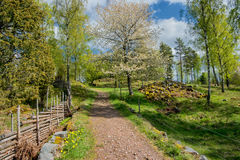 Springtime in Sweden Royalty Free Stock Images