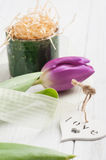 Springtime table decoration with tulip Royalty Free Stock Photo