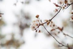 Springtime Tree flowers background Stock Photography