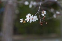 Springtime Tree flowers background Stock Photo