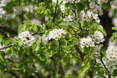 Springtime trees Stock Photo