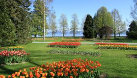 Springtime Tulips feast, Morges, Switzerland Royalty Free Stock Image