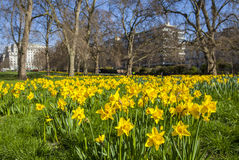 Springtime View of Green Park in London Stock Photos