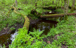 Springtime view of natural stand with little river Royalty Free Stock Photos