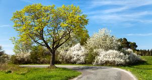 Springtime view, road and flowering trees Royalty Free Stock Image