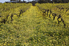 Springtime vines in the Barossa Valley 2 Stock Photos