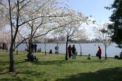Springtime in Washington , DC Royalty Free Stock Images