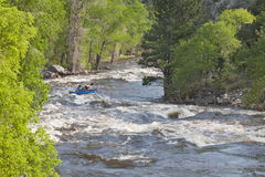 Springtime whitewater in Colorado Stock Photography
