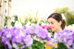 Springtime woman in flowers garden smell the primroses in basket Royalty Free Stock Photography