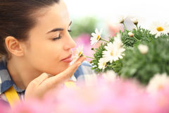 Springtime, woman in garden of daisies flowers Stock Photography