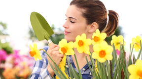 Springtime woman in garden with tools in hands. With narcissus Stock Image