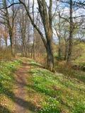 Springtime wood Royalty Free Stock Photography