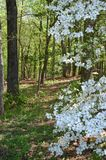 Springtime woods Royalty Free Stock Photos
