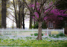 Springtime Yard and Picket Fence royalty free stock image