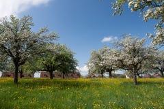 Springtimefruktfruktträdgård Fotografering för Bildbyråer