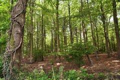 springtimeskogsmark arkivbilder