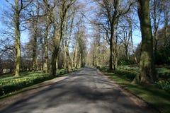 springtimeskogsmarker Royaltyfri Bild