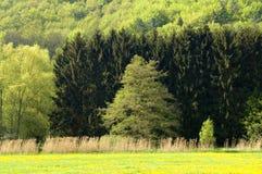 springtimetrees royaltyfri foto