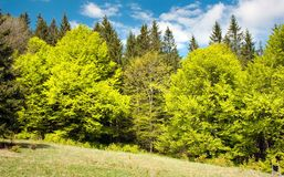 Springy green wood Royalty Free Stock Images
