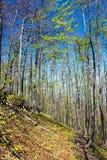 European beech wood with pathway Stock Photos