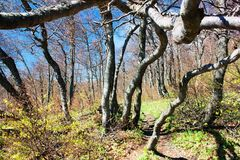 Springy view from european beech wood Stock Photography