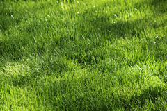 Sprinkers воды в поле Стоковые Фото