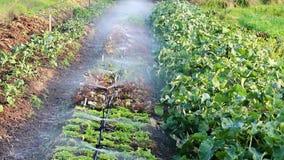 Sprinkers Bespuitend Water op Rij van Installaties op Klein Landbouwbedrijf stock footage