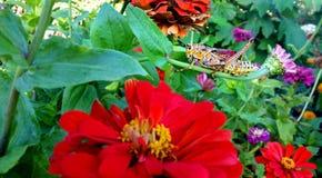 Sprinkhaan in bloemtuin Royalty-vrije Stock Foto's