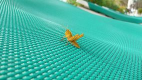Sprinkhaan op een zonbed 1 stock foto
