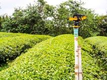 Sprinkle in tea plantation Stock Photos
