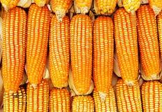 Sprinkled corn background Stock Photography