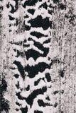 Sprinkled flour, zebra background Stock Photography