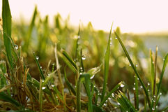 Sprinkled grass in soft light Royalty Free Stock Images