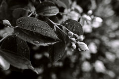 Sprinkled leaves and flower buds Stock Photos