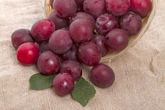 Sprinkled red plum Stock Image