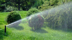 Sprinkler. In action at a garden royalty free stock photography