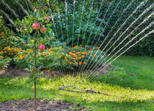 sprinkler Fotografia de Stock Royalty Free