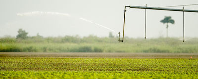 Sprinkler Stock Image