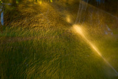 Sprinkler of automatic watering grass Stock Images