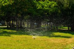Automatic water spray for lawns on the street. Sprinkler of automatic watering in the park royalty free stock photo