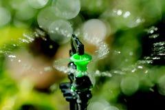 Sprinkler and bokeh. Garden irrigation system watering lawn Stock Photos