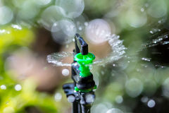Sprinkler and bokeh. Garden irrigation system watering lawn Stock Photo