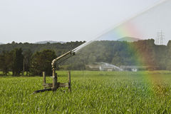 Sprinkler and corn Stock Image