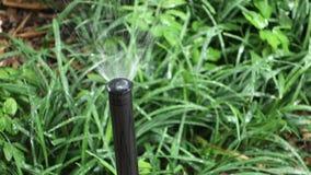 Sprinkler stock footage