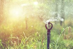 Sprinkler head watering in agricultural plants. Close up of sprinkler head watering in agricultural plants, irrigation system royalty free stock photo