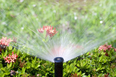 Sprinkler head watering the bush Stock Photography