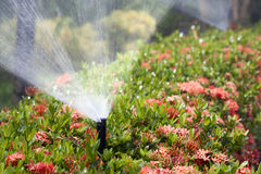 Sprinkler head watering the bush and grass Stock Photos